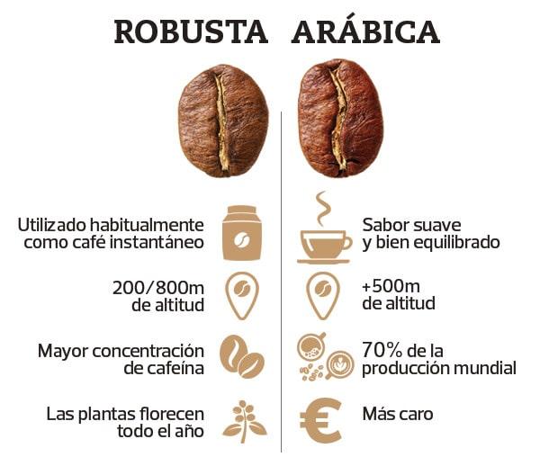 Café robusta y arábica comparativa